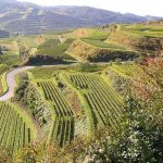 wijn-transport-duitsland